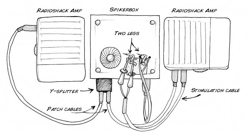 Experiment: NeuroProsthetics